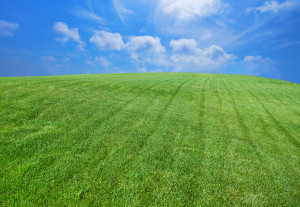 Green lush grass, with blue sky